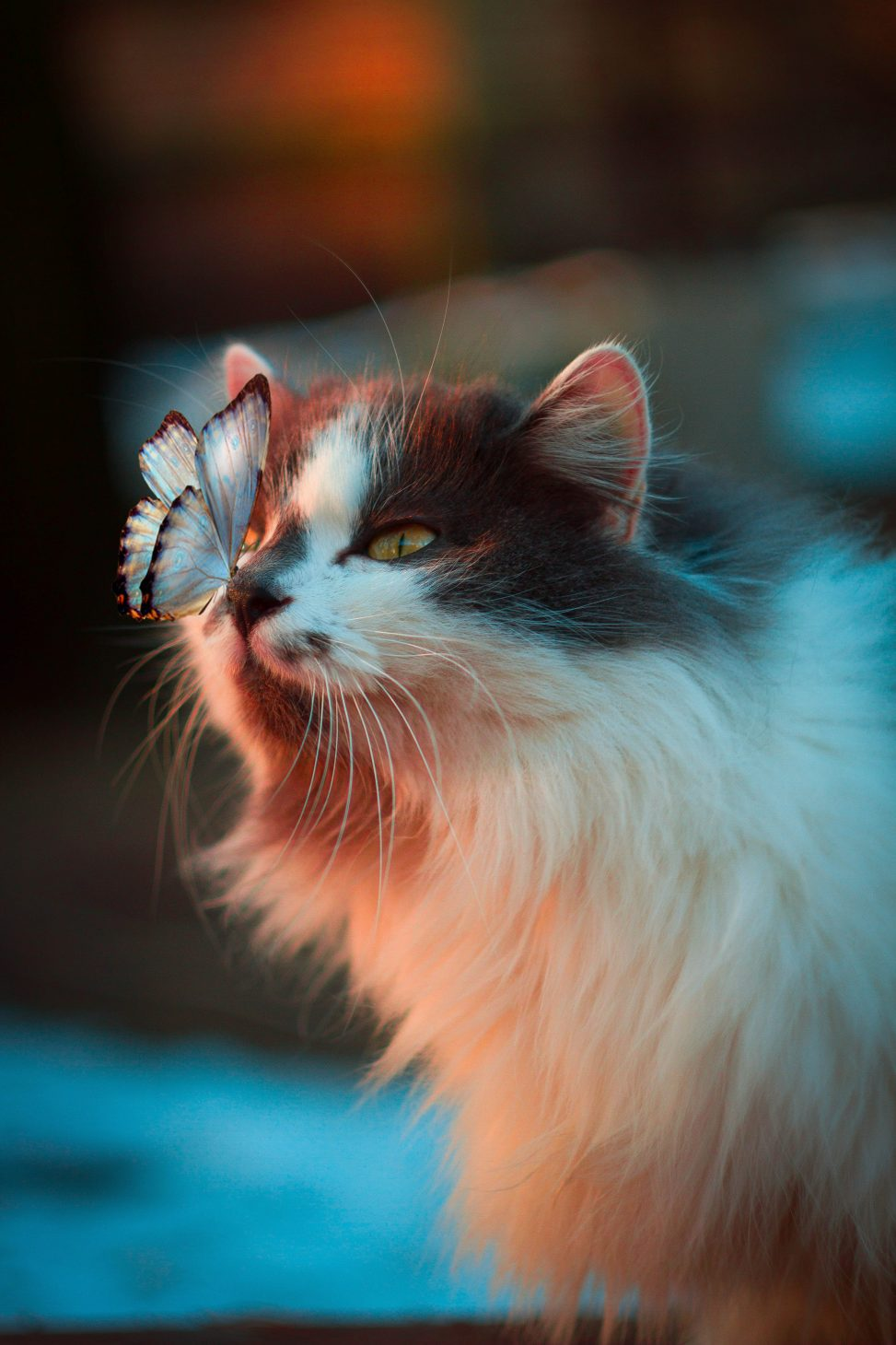 Cat with a butterfly on its nose